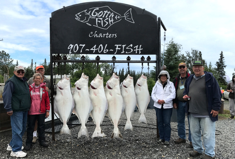 A great rack of Halibut caught fishing with Gotta Fish Charters in Ninilchik Alaska